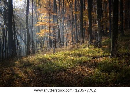 sun rays in autumn forest - stock photo