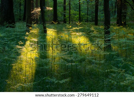 Sun rays in spring forest on sunrise - stock photo
