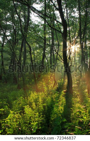 Sun rays in spring forest on sunset - stock photo