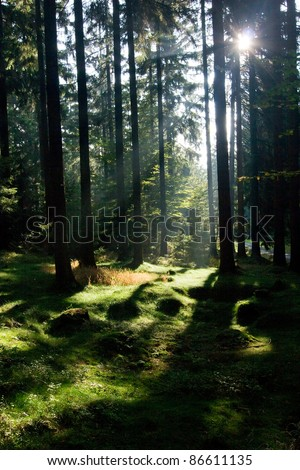 Sun rays in the morning forest