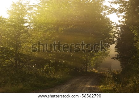Sun rays making their way through the early morning mist and the trees - stock photo