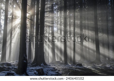 Sun rays pass through the misty mountain forest - stock photo