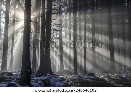 Sun rays pass through the misty mountain forest - stock photo