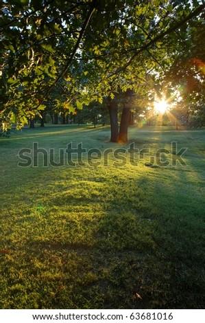 sun rays peeking through leaves - stock photo