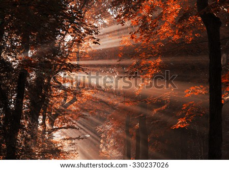 Sun rays shining through the trees on an empty lane in the forrest. - stock photo