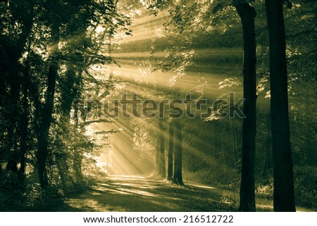 Sun rays shining through the trees on an empty lane in the forrest. Monochrome/vintage look. - stock photo