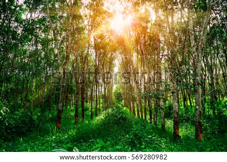 Sun rays through forest trees