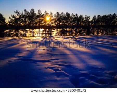 sun rays through the branches of trees in winter. pink and purple shadows on the snow in the forest by the setting sun. winter landscape - stock photo