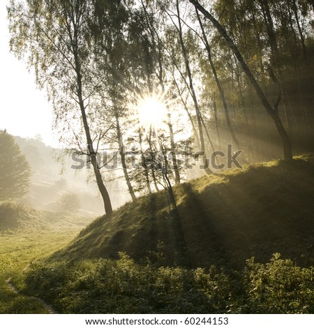 Sun's rays, visible through the trees in the misty morning - stock photo