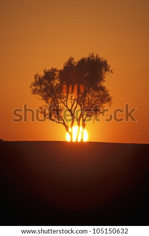 Sun Setting Behind Tree, Kentucky
