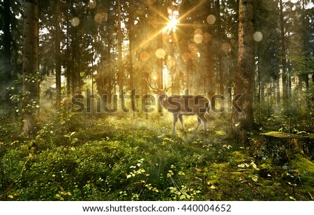 Sun shines into a fairytale forest - stock photo