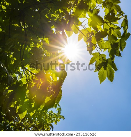 Sun shines through tree crowns in summer - stock photo