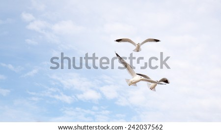 Sun shining and birds flying over a heavenly blue sky - stock photo