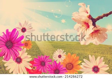Sun shining beams over the green field and blossom spring floral magic background done with a vintage retro instagram filter  - stock photo