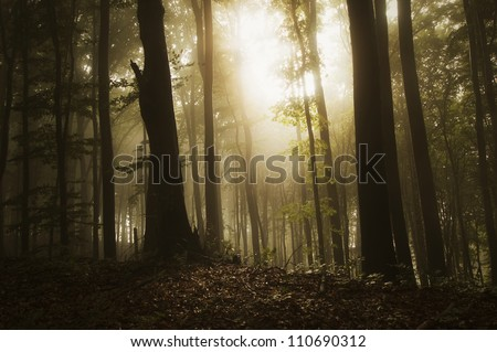 sun shining in forest