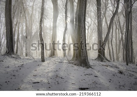 sun shining in misty forest in winter - stock photo