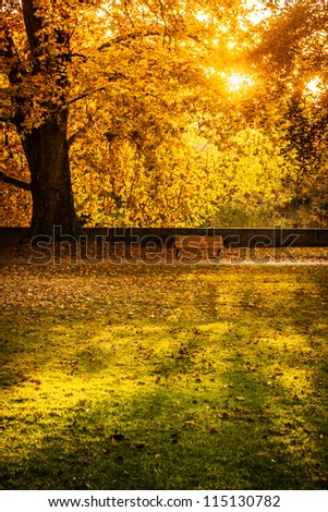 sun shining into an park in autumn - stock photo