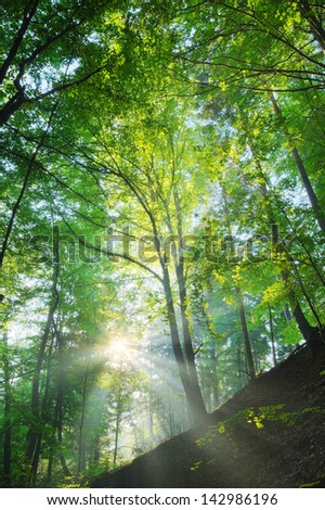 Sun shining on the forest slope - stock photo