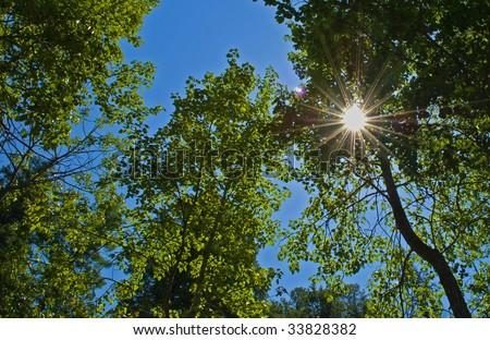 Sun shining through a canopy of trees - stock photo