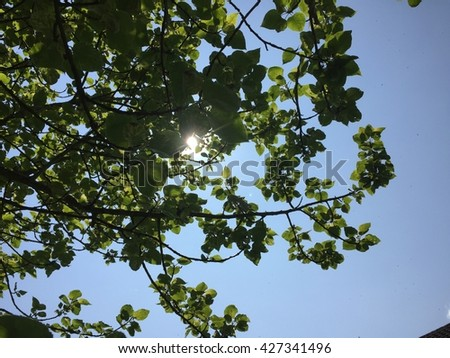 Sun shining through the tree leaves