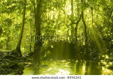 sunbeam in green forest with water reflection in morning - stock photo