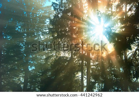 Sunbeam in the morning forest in Carpathians Mountains - stock photo