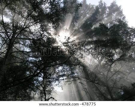 Sunbeams - stock photo