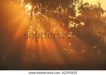 sunbeams at a misty morning - stock photo