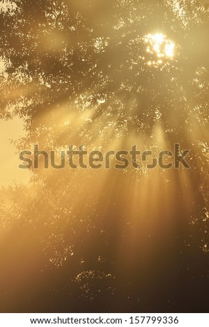 Sunbeams breaking through morning fog and tree