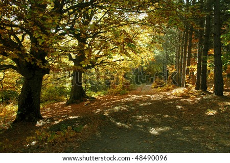 Sunbeams falls into the spring forest with oak trees surrounded by mist. - stock photo