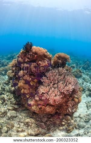 Sunbeams illuminate a coral pinnacle on a tropical reef - stock photo