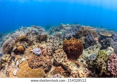 Sunbeams illuminate a shallow water tropical coral reef - stock photo