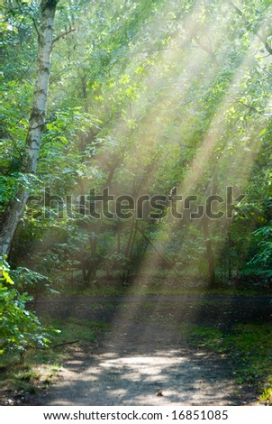 Sunbeams in a forest on a foggy morning.