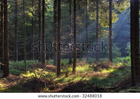 Sunbeams in forest