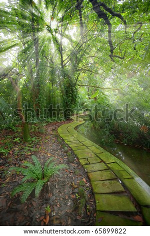 Sunbeams in the botanical gardens in Singapore - stock photo