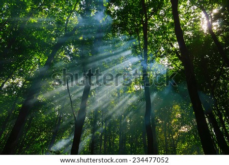 sunbeams in the forest - stock photo