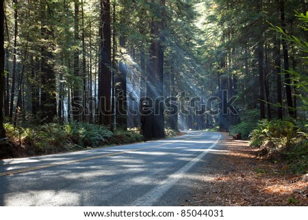 Sunbeams of morning sunlight shine through redwood forest and lighting a forest road in Redwood National and State Parks in northernmost coastal California. - stock photo