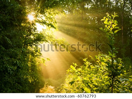 Sunbeams pour through trees in misty forest - stock photo
