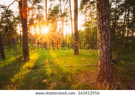 Sunbeams Pour Through Trees In Summer Autumn Forest At Sunset, Sunrise. Russian Nature - stock photo