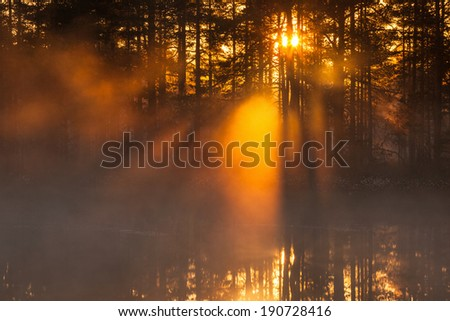 Sunbeams shining through the mist in the forest at sunrise - stock photo