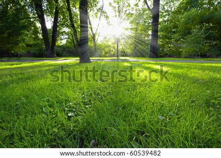Sunbeams shining trough in the forest - stock photo