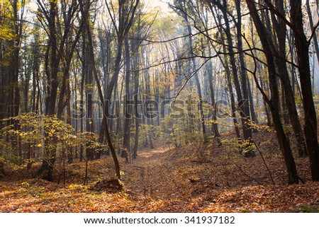 Sunbeams through Autumn Forest with Leafs Changing Color - stock photo