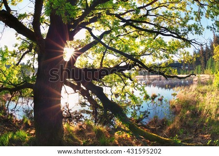 sunbeams through oak tree branches by lake in spring - stock photo