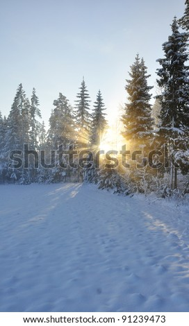 Sunbeams trough the tree in winter - stock photo