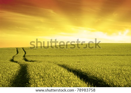 Sundown over the filed at summer. - stock photo