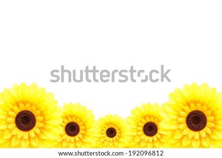 Sunflower at lower border - stock photo