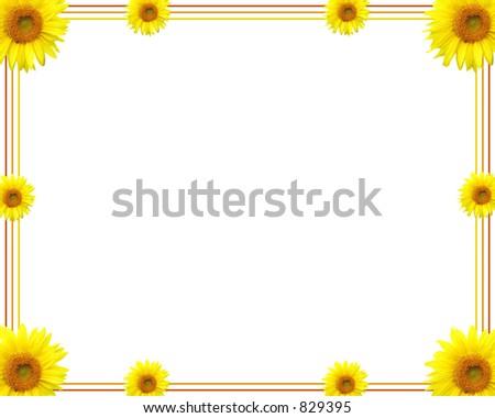 Sunflower border - stock photo