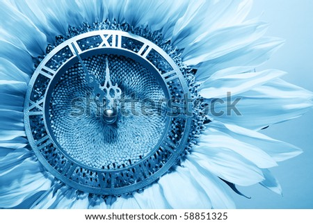 Sunflower-clock indicative approach of New Year