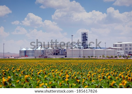sunflower field and Agricultural Silo  - stock photo