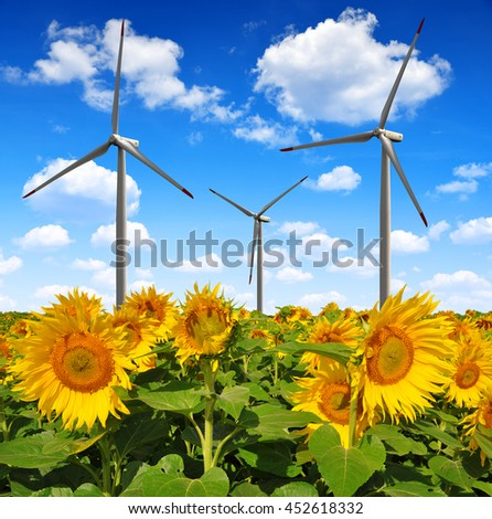 Sunflower field with wind turbines.